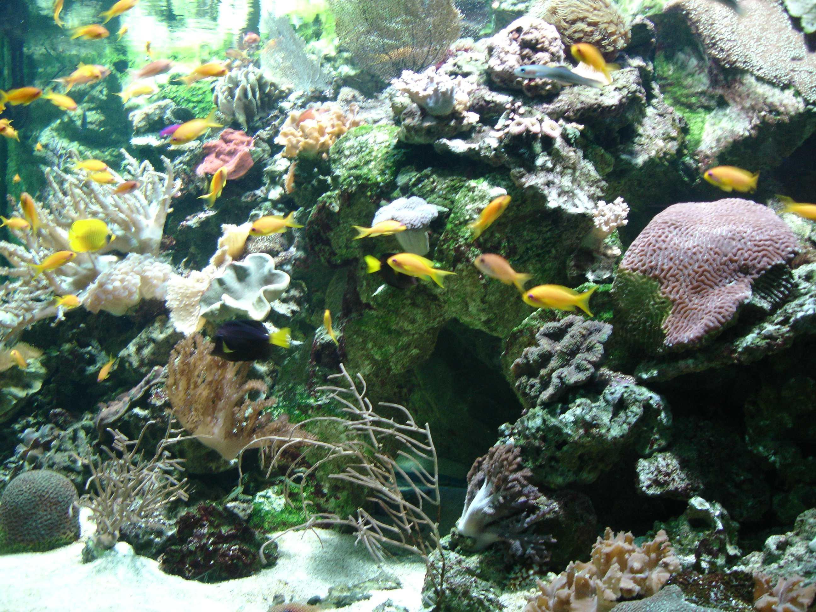 acquario con vari pesciolini