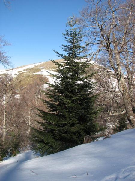 oh albero - O Tannenbaum - Albero di Natale